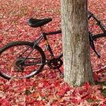 Fahraeder-Herbst-Aktion